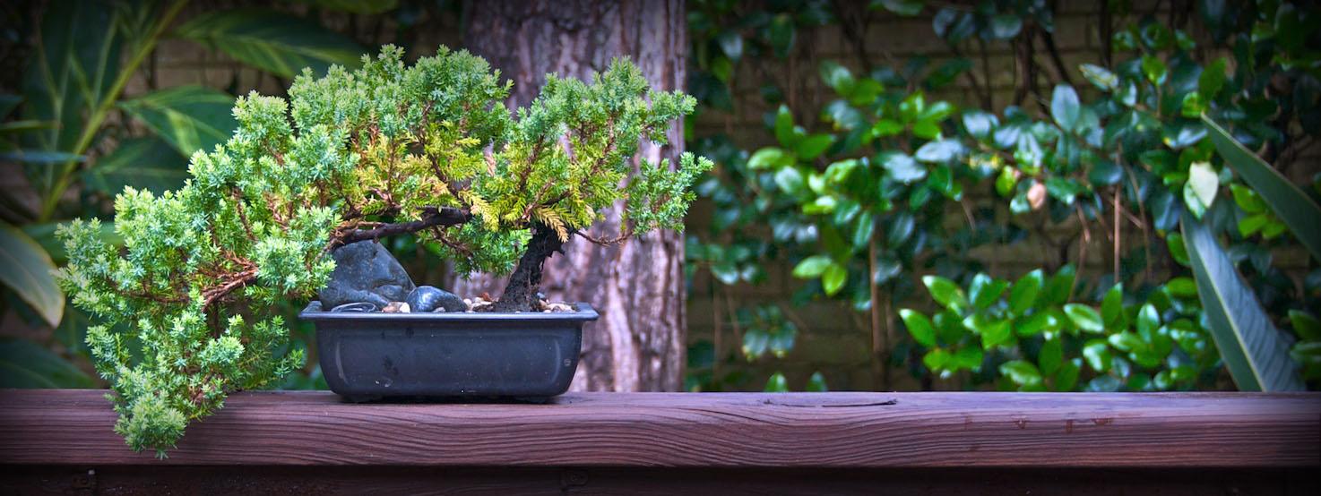Plant may 15 2008  2280 blog