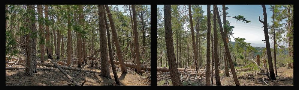 Aspen Loop Collage-1 blog