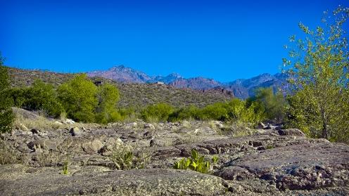 Sabino Creek In Sabino Canyon