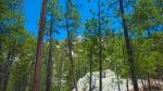 Aspen Loop To WildernessRocks