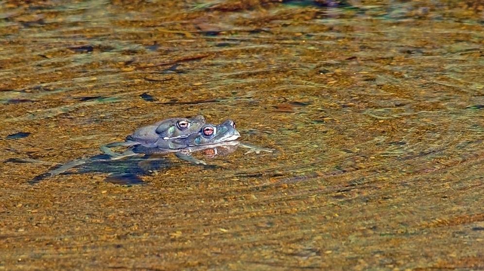 Sabino Canyon & Sonoran Desert Toads