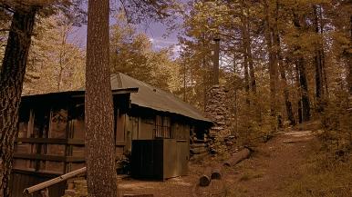 Bear Wallow Leaves