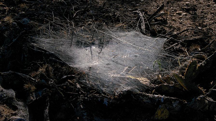 Sabino Canyon Oct. 1, 2012