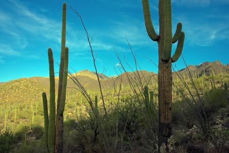 Sabino Canyon Surprise