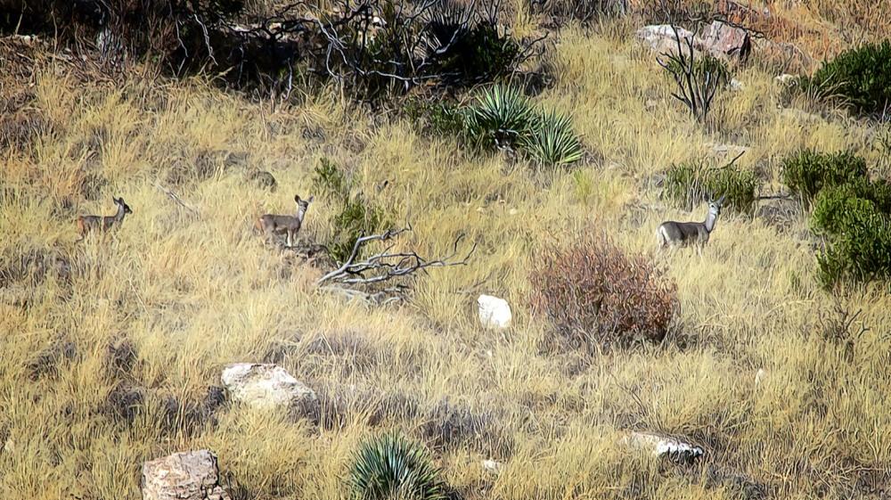 Molino Basin Trail