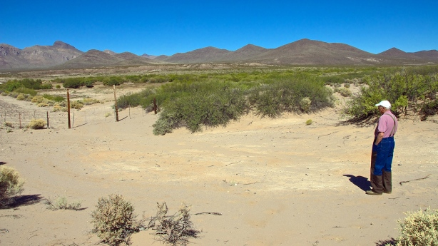 Dry Riparian Area In The San Simon Valley