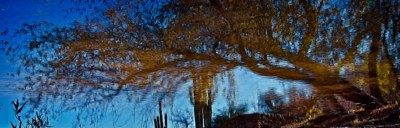 SCVN Nature Walk 01-03-12_20120104_1172 Sky Above Water Below blog