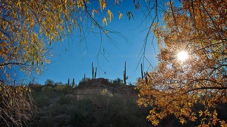 SCVN Nature Walk 01-03-12_20120104_1174 Terrarum blog