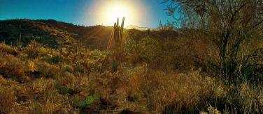 Wildhorse Trail