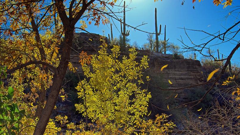 Ned's Nature Walk -- 01-1-09-13