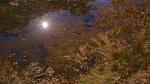 Ned's Nature Walk —01-1-09-13