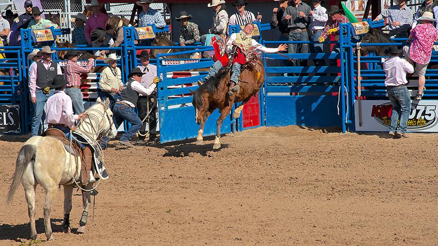 Tucson Rodeo 02-17-13