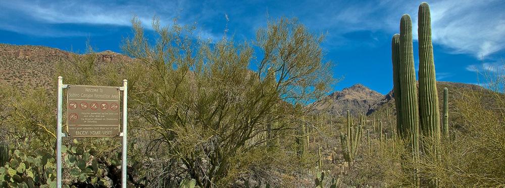 Bear Canyon 2013