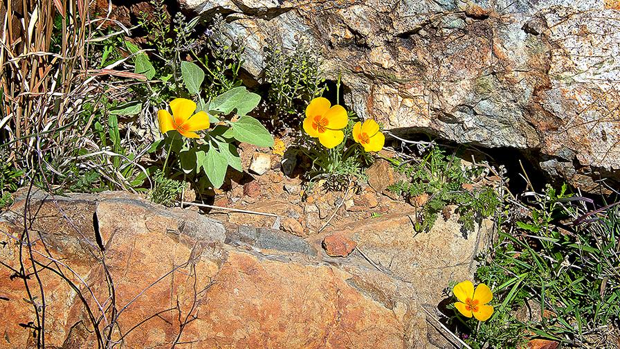 Sweetwater Trail Wasson Peak