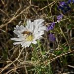 Esperero Trail Wildflowers Spring2013