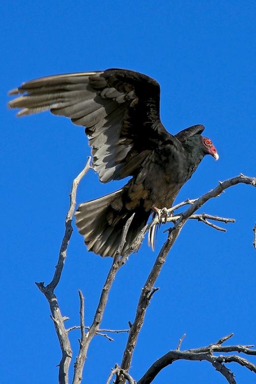Vultures & Sunsets