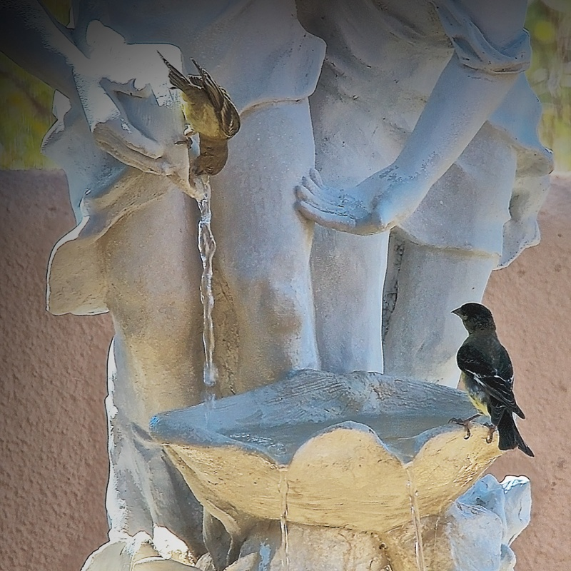 Birds On The Fountain