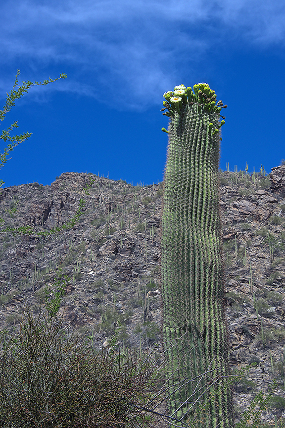 Green Mountain, Saguaro, Mission