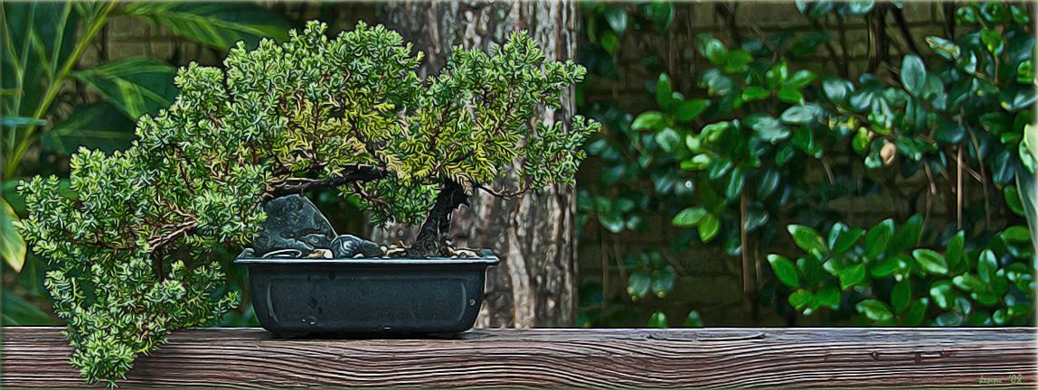 Plants May 15, 2008