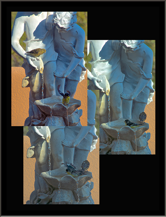 Birds In Fountain Collage Framed blog