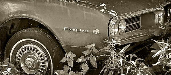 Fredric  Firebird B-W 3156 (2) blog