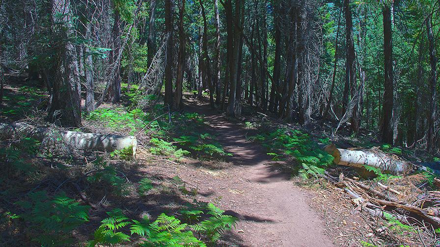 Turkey Run to Aspen Draw Trail