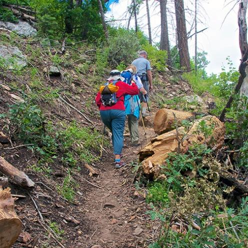 Butterfly Trail July 2013