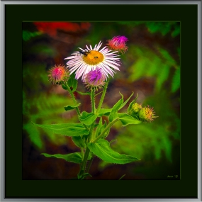 Butterfly Trail July 2013