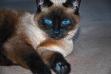Kika_20120101_1163 blog II
