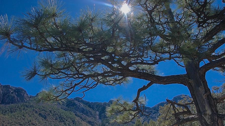 Madera Canyon  13162 blog