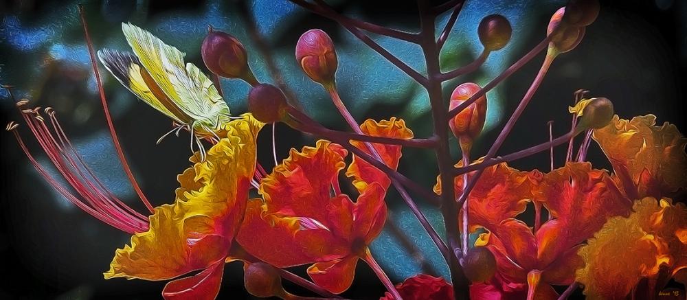 Tanuri Ridge Flowers Auguat 2013-7778 butterfly Art II blog