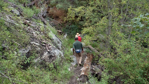 Crystal Trail Flowers-7860 blog