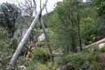 Crystal Trail Flowers-7868blog