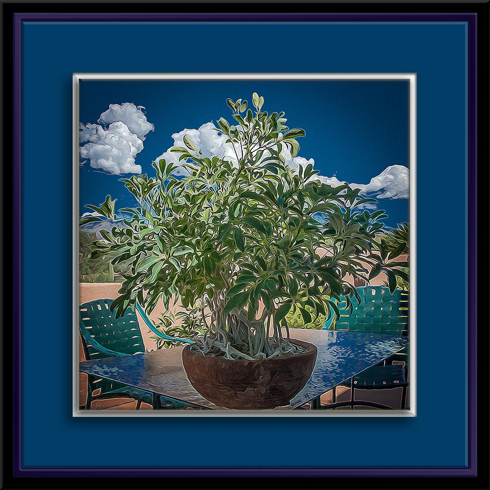 schefflera plant-7913 art blog