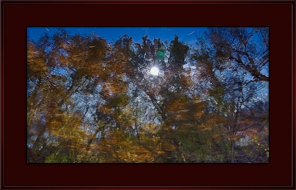 SCVN Nature_20111207_0503 Morning Dreams blog frame