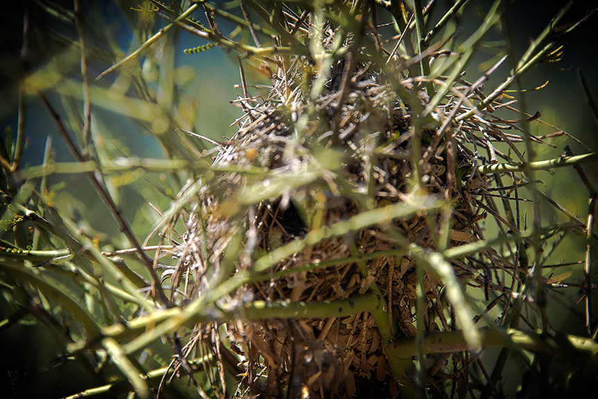 7 Falls Oct 2013-8283 verdin Nest blog