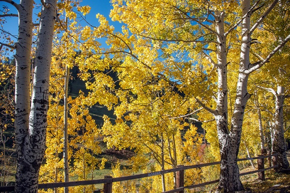 Aspen Draw Fall Colors-8364 blog