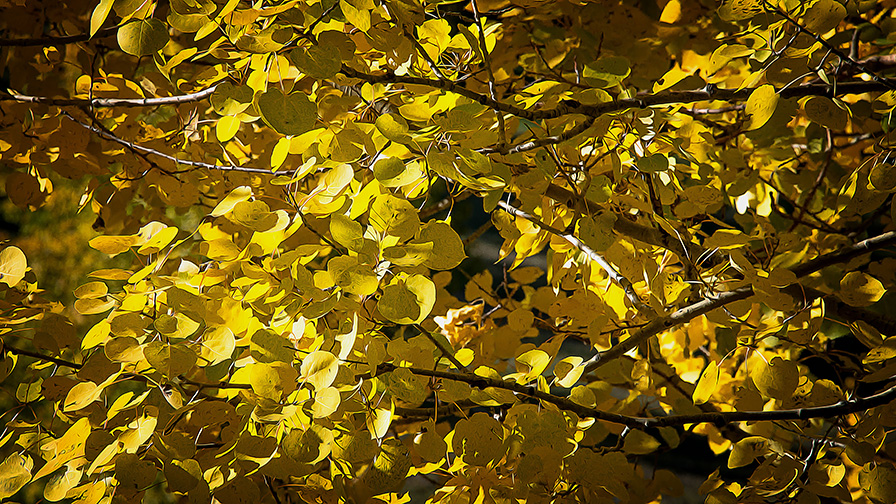 Aspen Draw Fall Colors-8365 art blog
