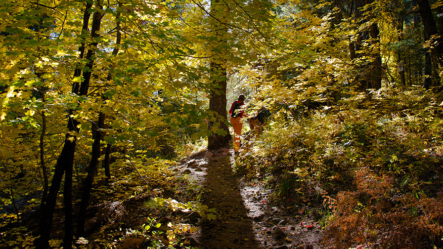 Aspen Draw Fall Colors-8371 blog