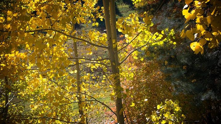 Aspen Draw Fall Colors-8406 blog