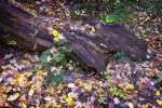 Aspen Trail —10-22-12