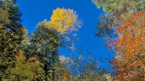 Aspen Trail -- 10-22-12