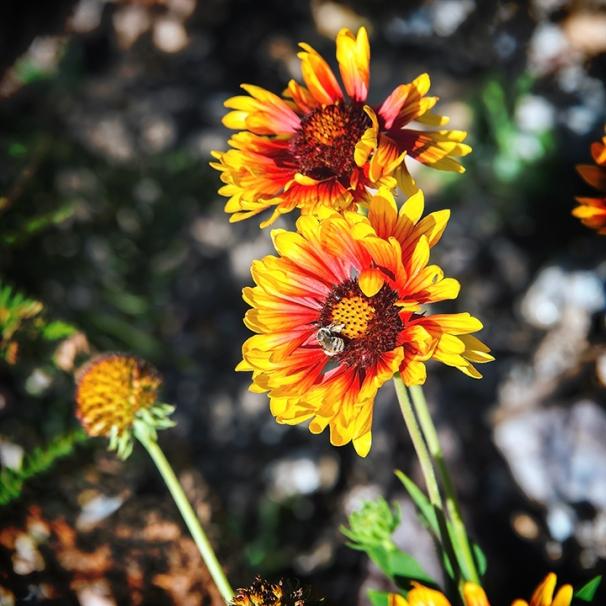 Carter Canyon Trail October 2013-8119 blog