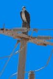 Puerto Penasco September 2013-0019 Sea Eagle blog