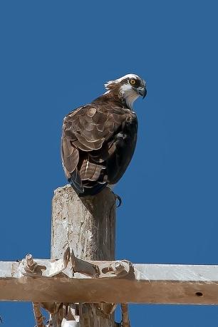 Puerto Penasco September 2013-0027 Sea Eagle blog