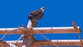 Puerto Penasco September 2013-0029-2 Sea Eagle blog