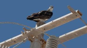 Puerto Penasco September 2013-0032-2 Sea Eagle blog