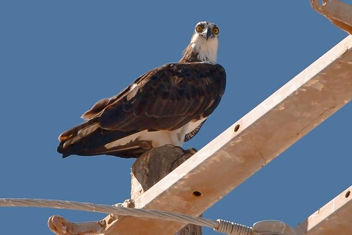 Puerto Penasco September 2013-0032-3 Sea Eagle blog