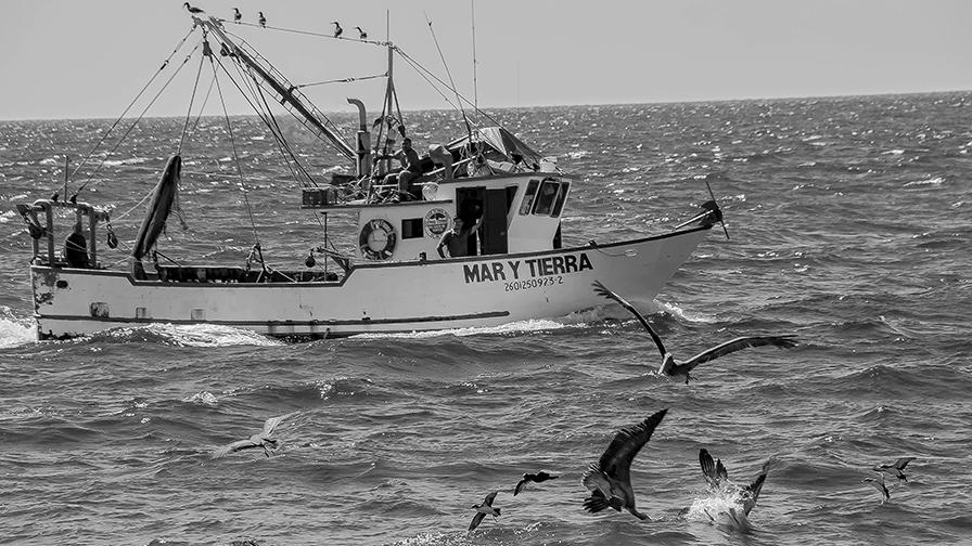 Puerto Penasco September 2013-0096