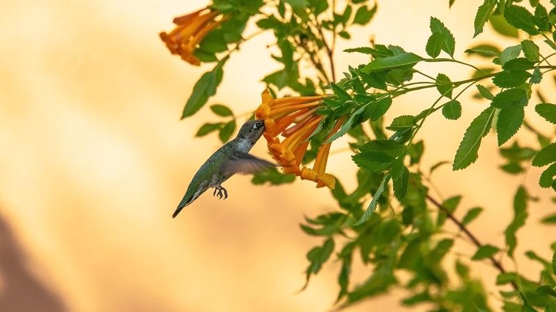 Flowers and Hummingbirds 11-02-13-8665 blog